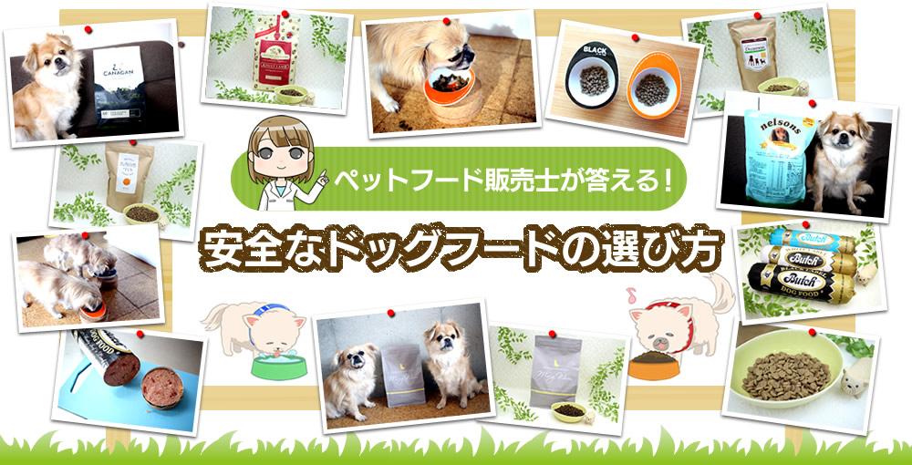 愛犬2匹と暮らすペットフード販売士が答える!安全なドッグフードの選び方、市販ドッグフードの品質、ご飯の与え方、健康など、犬の疑問・悩みについて。