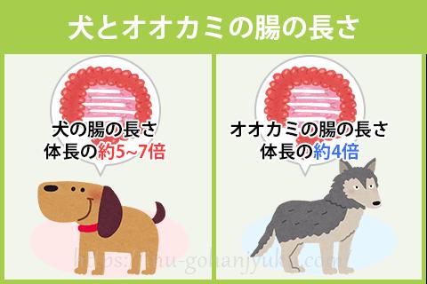 肉食動物の特徴である短い腸よりも腸が長くなり、オオカミよりも雑食に対応できる体へと変化したのです。