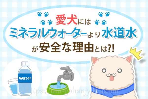 愛犬の飲み水に水道水が良い理由!ミネラルウォーターより安全って本当?