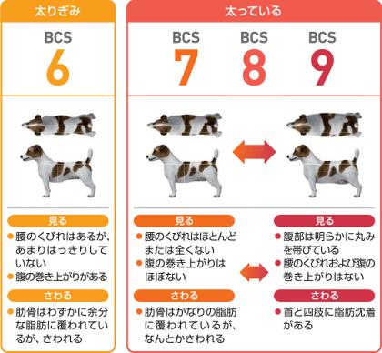 6が「太りぎみ」、7~9「太っている」と4つのグループに評価されます。