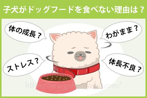 子犬がドッグフードを食べない理由は?