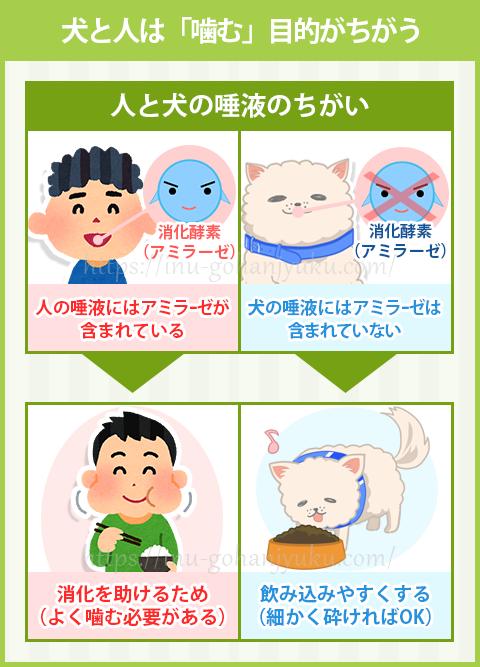 子どものころに注意された、「よく噛んで食べなさい!」の真意は、食べ物がスムーズに消化される手助けのためだったのです。