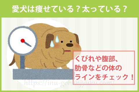 愛犬の体型をチェックしてご飯の量を見直そう
