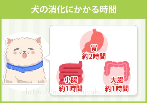 犬種や個体差によって各臓器の消化時間はもう少し長いこともありますが、約4~6時間ほどで食べたものがウンチとなって排泄されます。