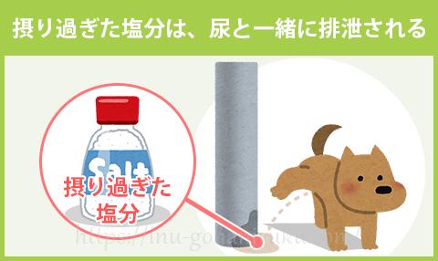 犬は汗をほとんどかかない!塩分を摂り過ぎたらどうなるの?