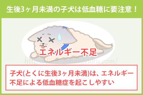 ご飯を食べない子犬は、低血糖症に陥りやすい!