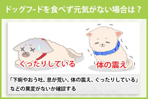 ドッグフードを食べず、おう吐や下痢もある場合は?