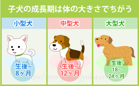 なお、子犬の成長期間は体の大きさによって変わります。