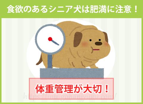 食欲のあるシニア犬は肥満に注意!