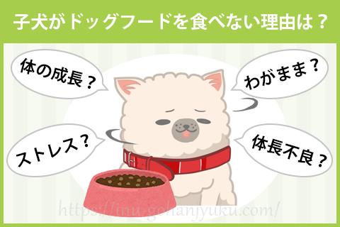 子犬がドッグフードを食べない場合