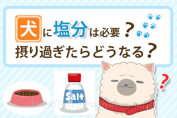 犬に塩分は必要?ドッグフードの塩分量や過剰摂取による病気のリスクは?