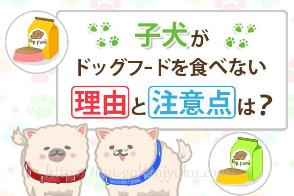 子犬がドッグフードを食べない理由!成犬より注意が必要なポイントは?