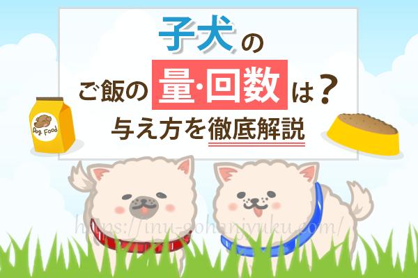 子犬のご飯の量・回数は?与え方や成犬用フードへの切り替え方を徹底解説