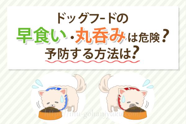 愛犬がドッグフードを噛まないけど大丈夫?早食い・丸呑みを防ぐ方法は?