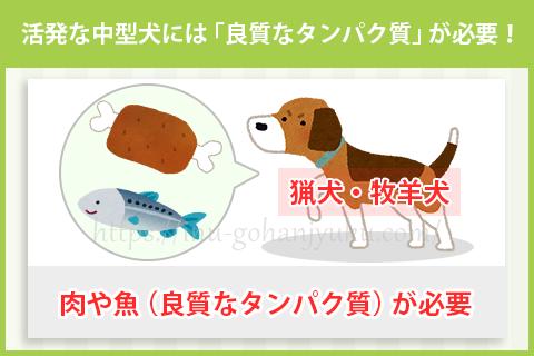 【ポイント①】中型犬は「良質なタンパク質」が重要!