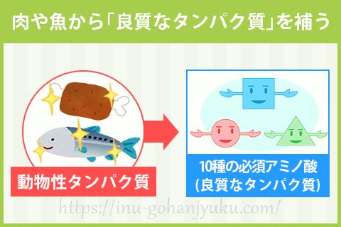 【ポイント①】肉か魚がメインの高タンパクフード