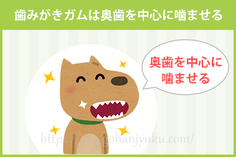 愛犬にガムを噛ませるときは、奥歯を中心にガムを噛ませるようにしましょう。