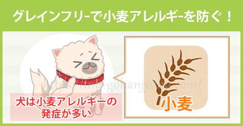 【ポイント②】犬に多い「小麦アレルギー」を予防できる
