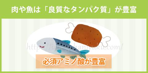 【ポイント③】肉や魚から「良質なタンパク質」を補う