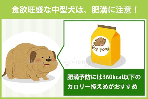 【ポイント②】食欲旺盛な中型犬はカロリー控えめが安心