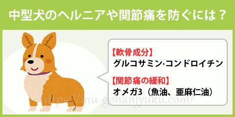 【ポイント③】グルコサミンやオメガ3で関節を強化!