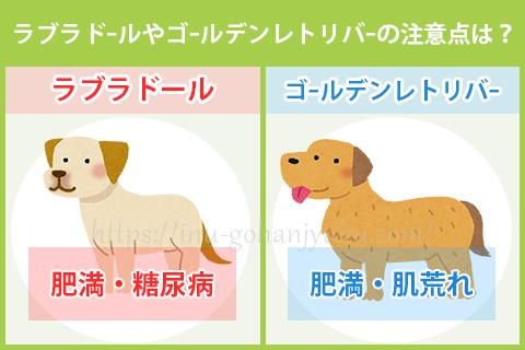 ラブラドールやゴールデンレトリバーの犬種別の注意点