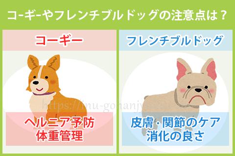 コーギーやフレンチブルドッグの犬種別の注意点