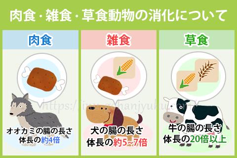 腸が短いほうが肉や魚を消化しやすく、腸が長くなるほど穀物などの植物性の食品を消化しやすくなります。