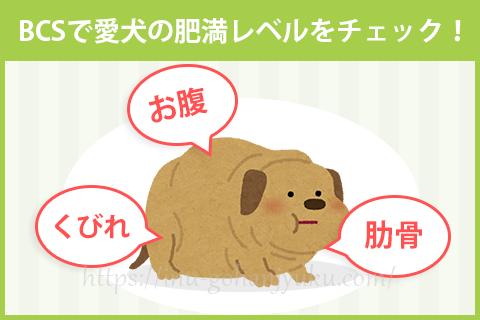 愛犬の肥満レベルは?BCSで肥満度をチェック!