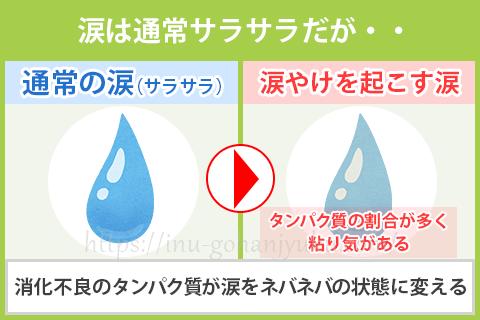 「涙やけ」の原因は、涙の成分とマイボーム腺の詰まり?
