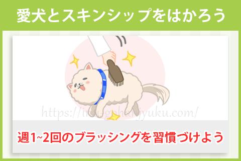 また愛犬とスキンシップをはかって、安心させてあげることも大切です。
