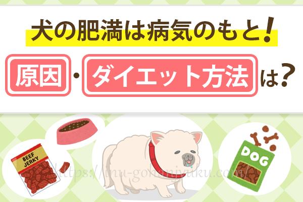 犬の肥満は病気のもと!肥満の原因・ダイエット方法は?