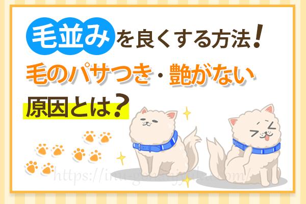 【毛並みを良くする方法】犬の毛のパサつき・艶がない原因は?