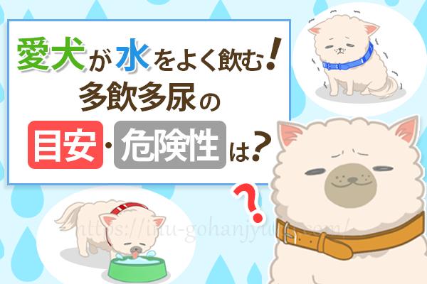 犬の多飲多尿は病気?愛犬が水をよく飲む!多飲多尿の目安・危険性は?