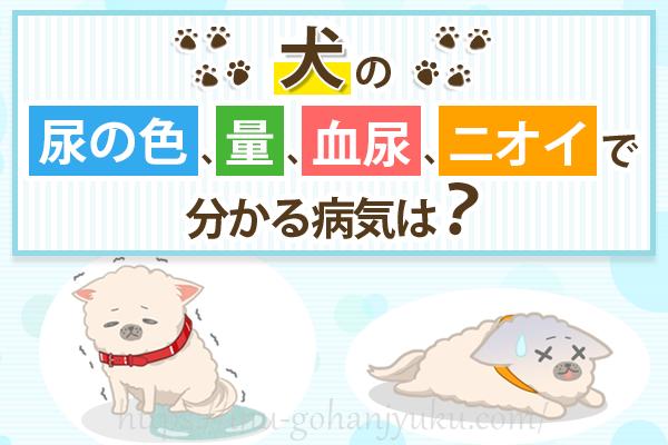 愛犬の尿がおかしい!尿の色、量、血尿、ニオイの症状別で見る病気一覧
