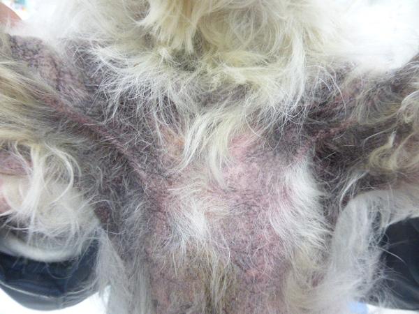 アトピー性皮膚炎は、環境中のホコリや花粉、食品などに免疫機能が過剰反応して皮膚に炎症を起こすアレルギー性の皮膚病の1つです。