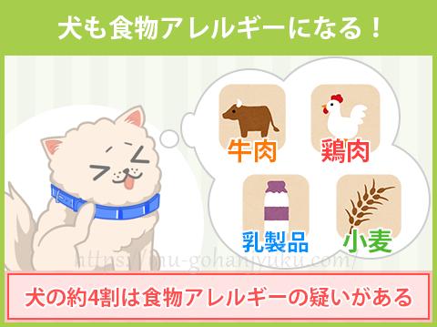 犬の4割は、食物アレルギー!?