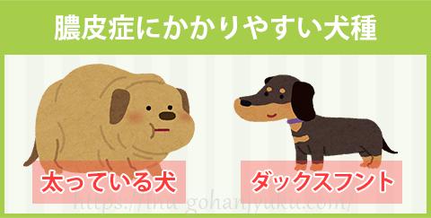 膿皮症にかかりやすい犬種