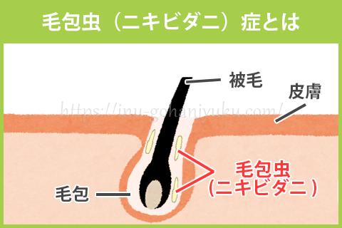 毛包虫(ニキビダニ)症
