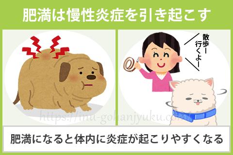 【免疫力が下がる原因③】肥満・運動不足
