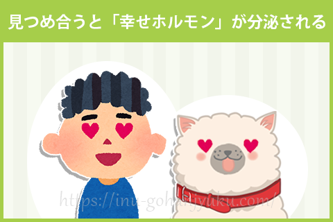 【改善方法①】愛犬と見つめ合い「幸せホルモン」を増やす