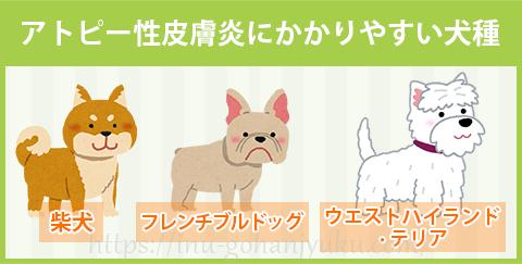 アトピー性皮膚炎にかかりやすい犬種