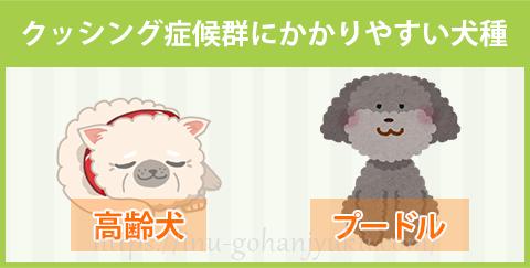 クッシング症候群にかかりやすい犬種