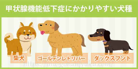 甲状腺機能低下症にかかりやすい犬種
