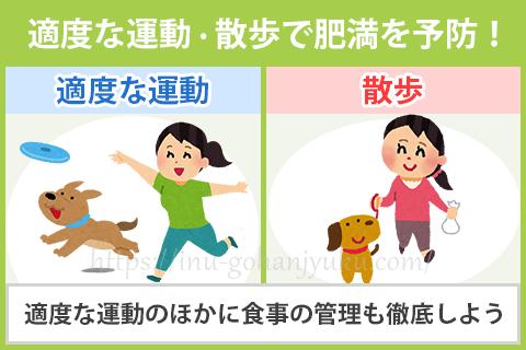 【改善方法④】適度な散歩で肥満を防ぐ!