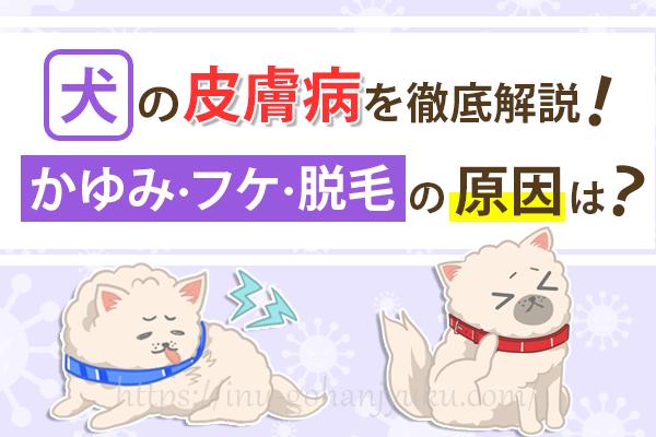 【犬の皮膚病の種類一覧】かゆみ・フケ・脱毛など症状別に解説!
