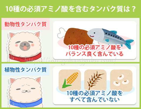 肉や魚に含まれるタンパク質には、犬の体に欠かせない「必須アミノ酸」が10種類すべて含まれています。
