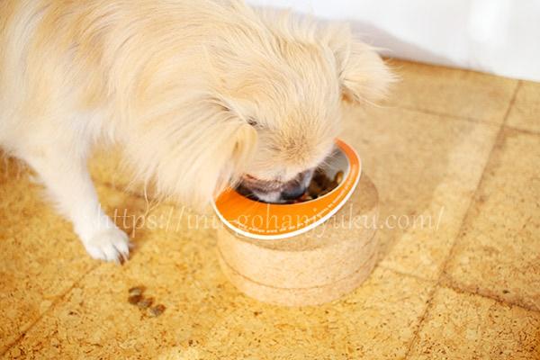 粒の大きさを気にすることなく、バクバク・・お皿からこぼれたフードも後で食べていました。