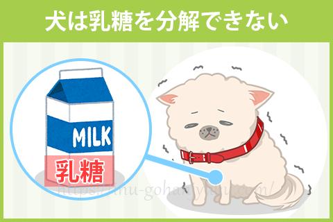 犬は乳糖を分解できないため、牛乳を飲むと下痢になる
