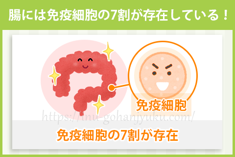 【効果2】お腹の調子が良くなると、免疫力がアップする!